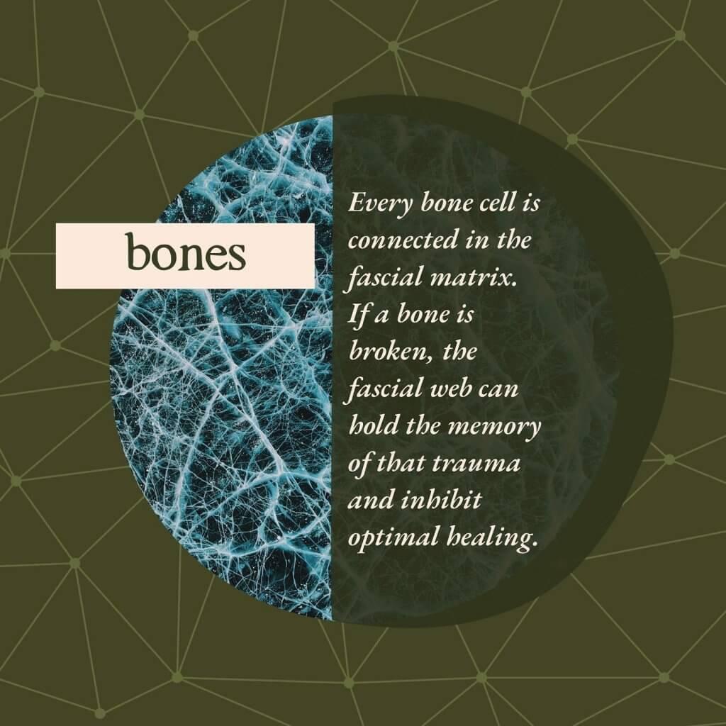Bones - Gillespie Approach–Craniosacral Fascial Therapy