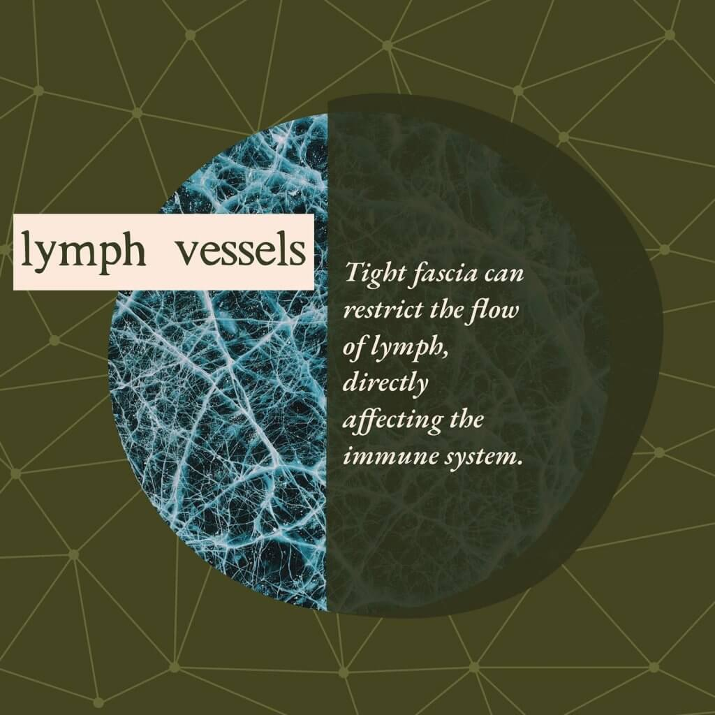 Lymph vessels - Gillespie Approach–Craniosacral Fascial Therapy