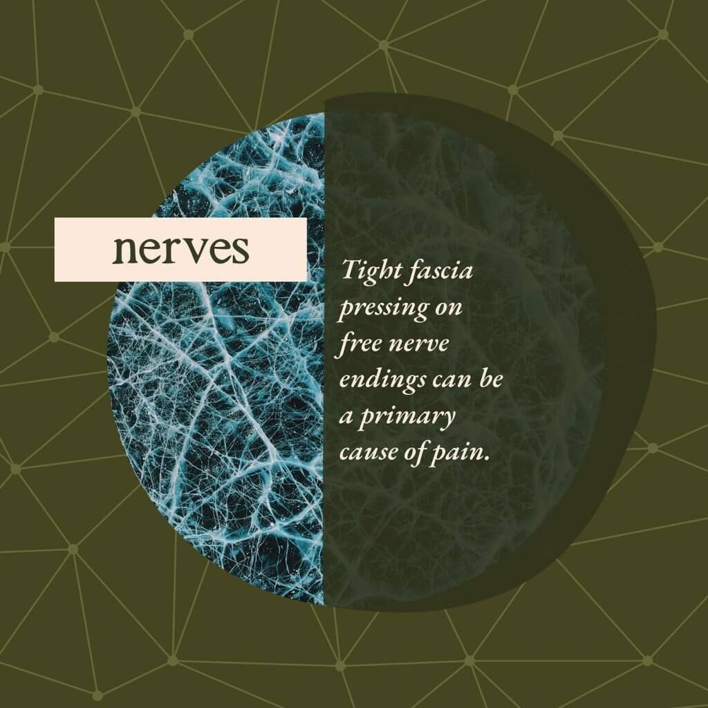 Nerves - Gillespie Approach–Craniosacral Fascial Therapy